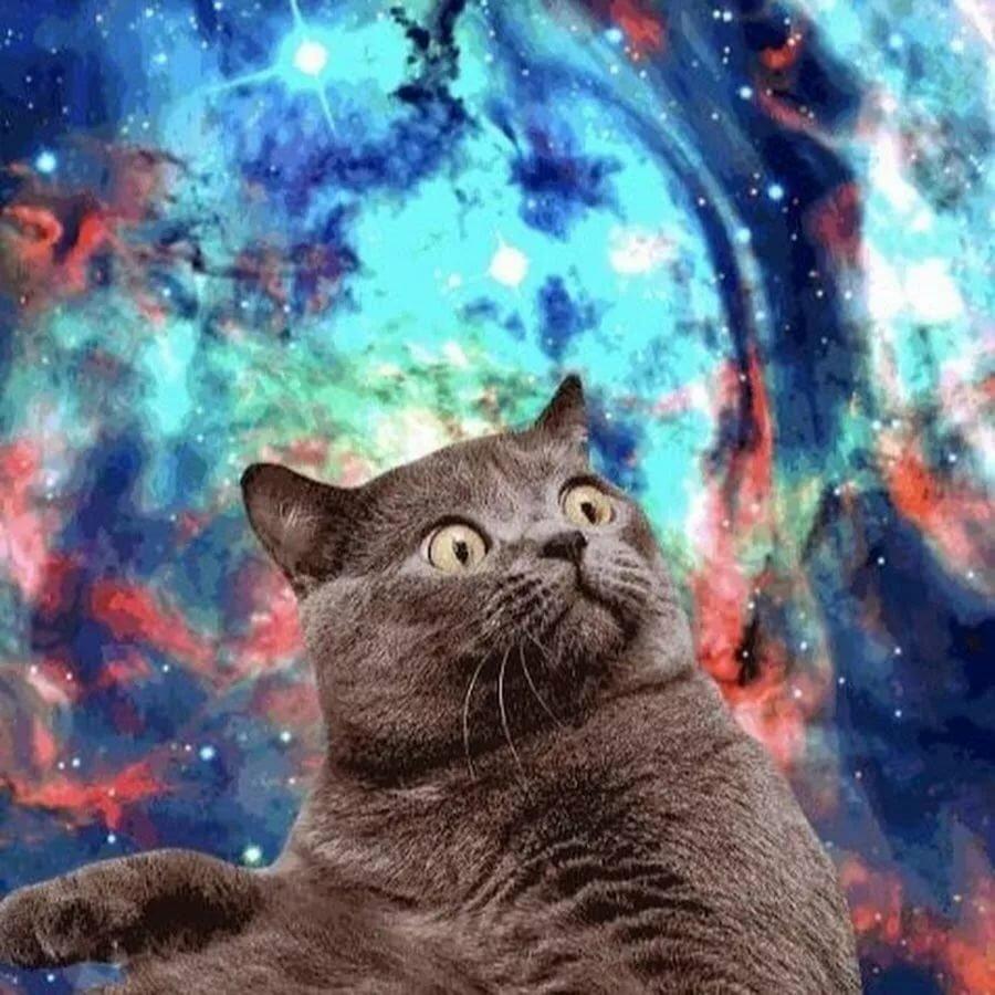 картинки с кошками в космосе угловой