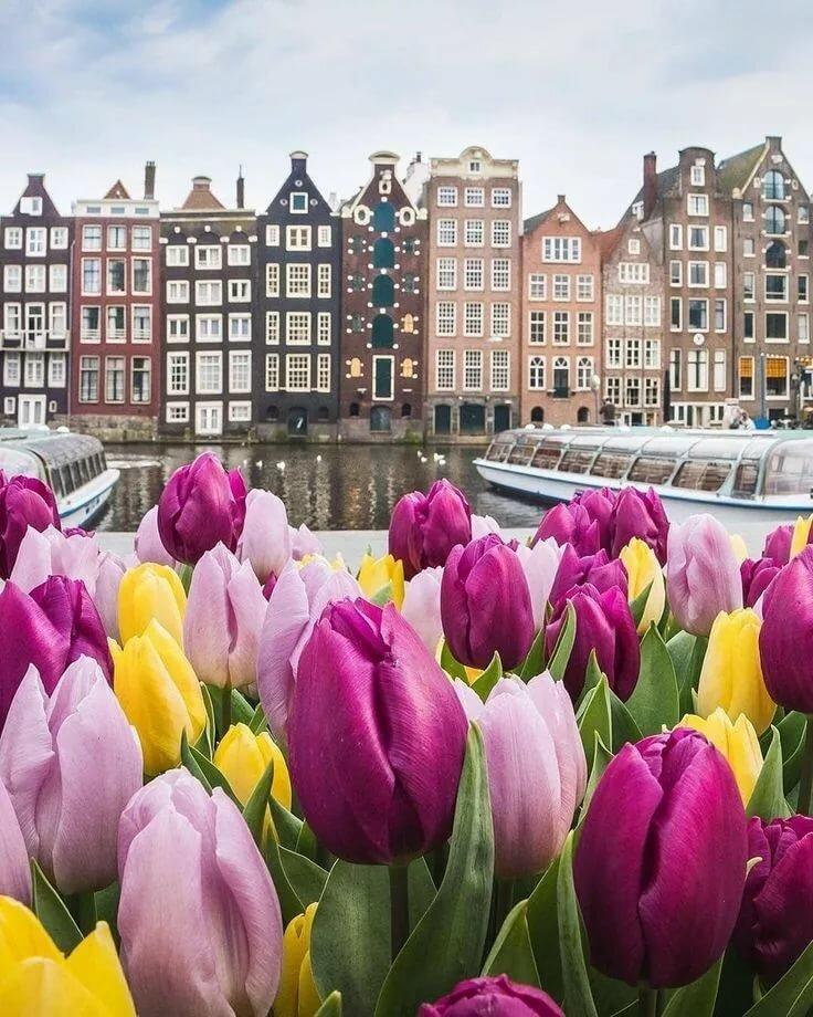 контейнер картинка города голландия тюльпаны жадным видом