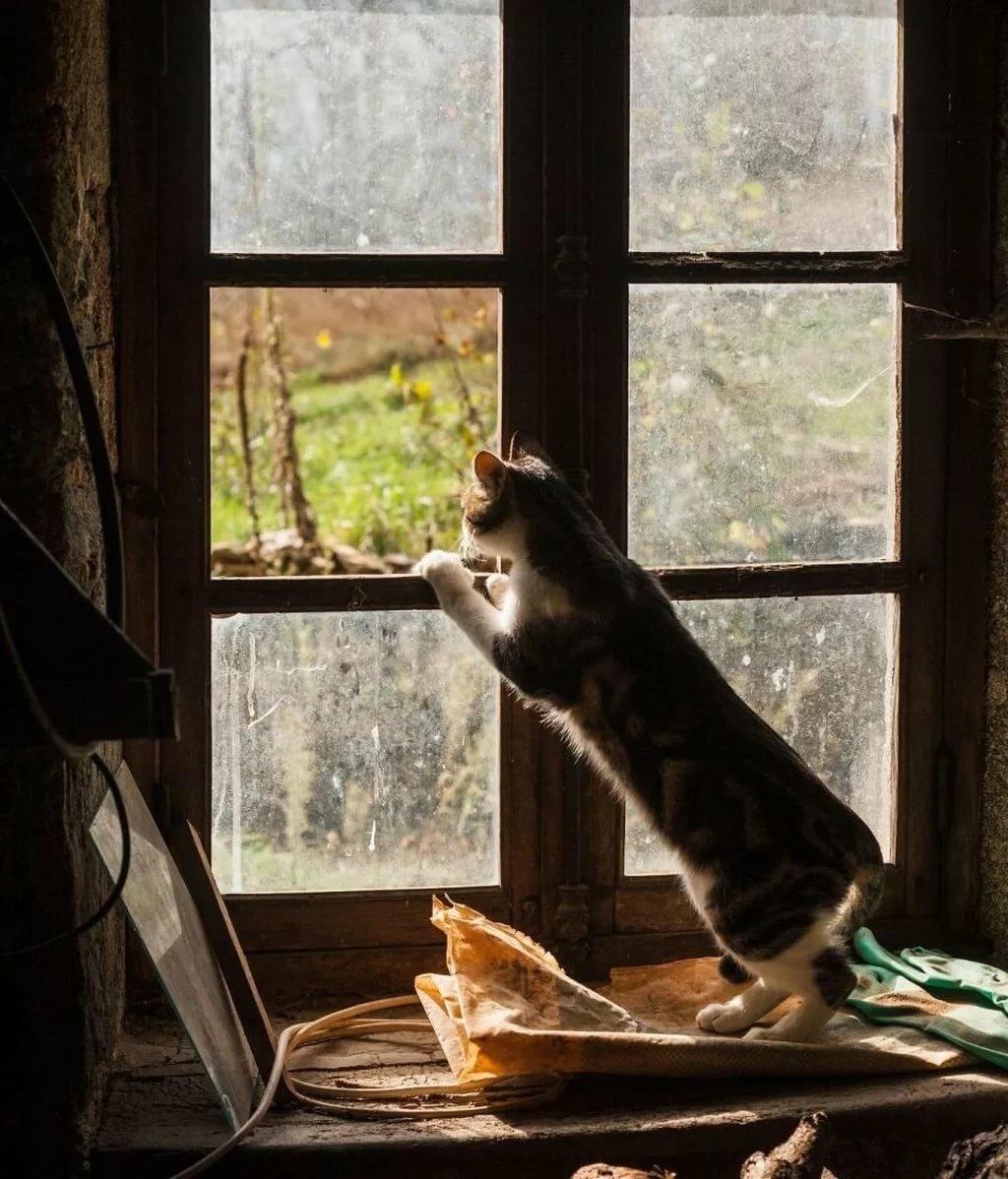 без милая картинка окно актера сдали