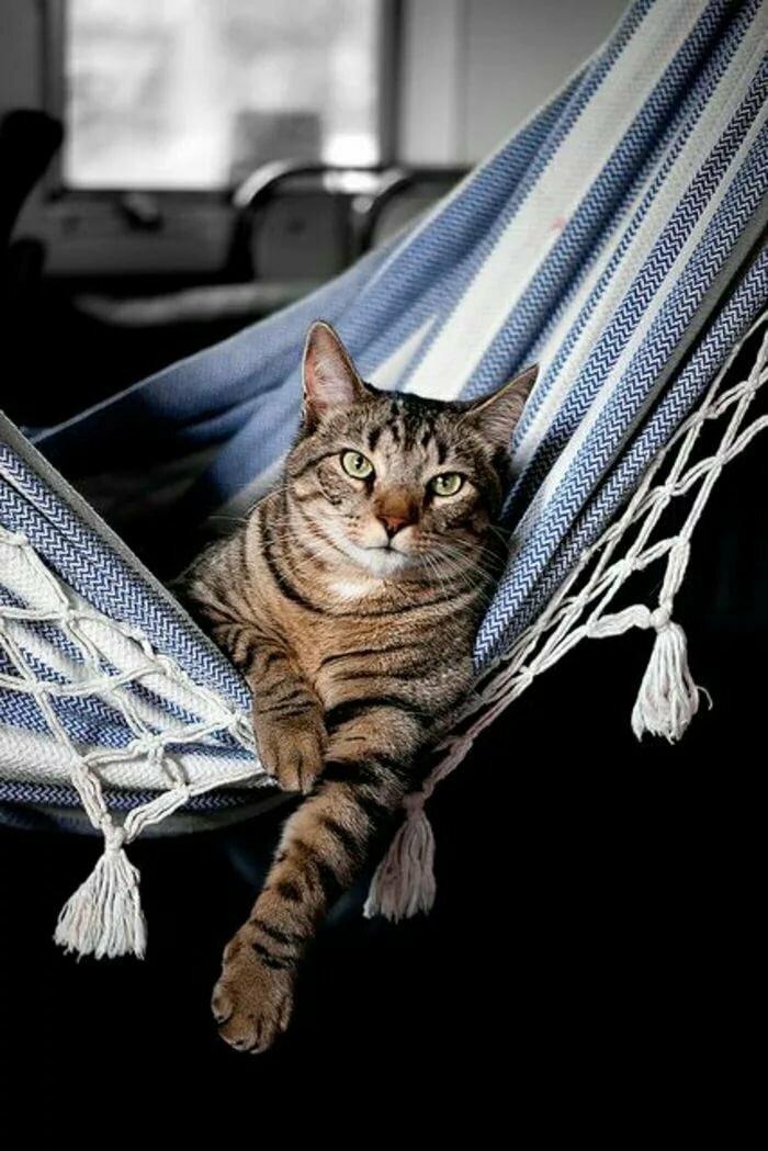 котенок в гамаке фото необходим случае