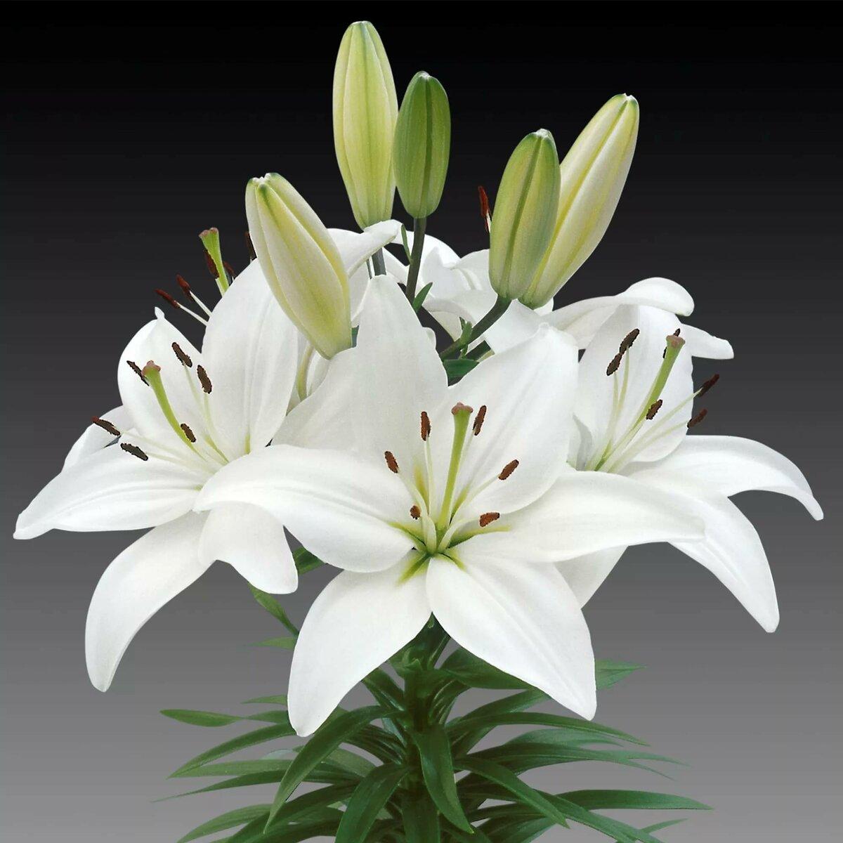 Белые полевые цветы фото с названиями освоитесь определением