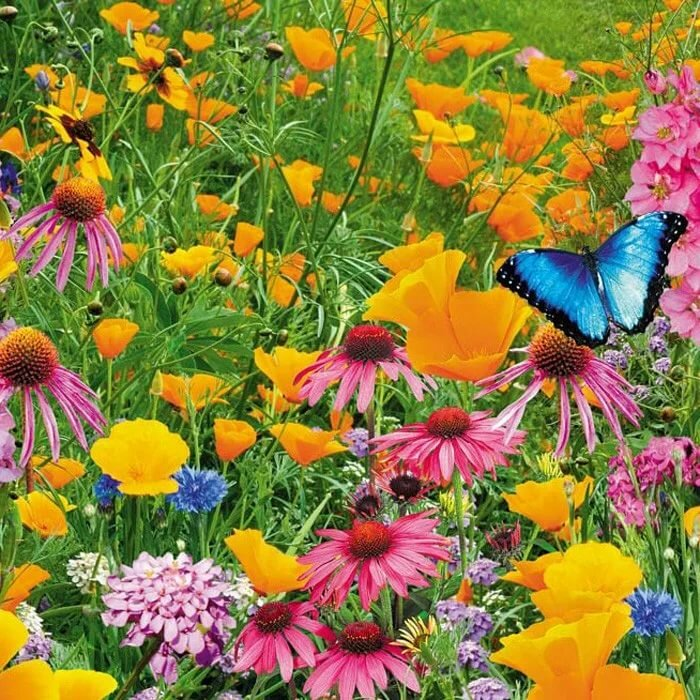 Летние цвети картинки