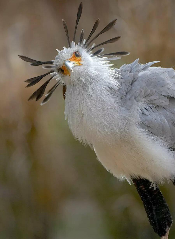 огни картинки классных птиц оплаты, выяснилось