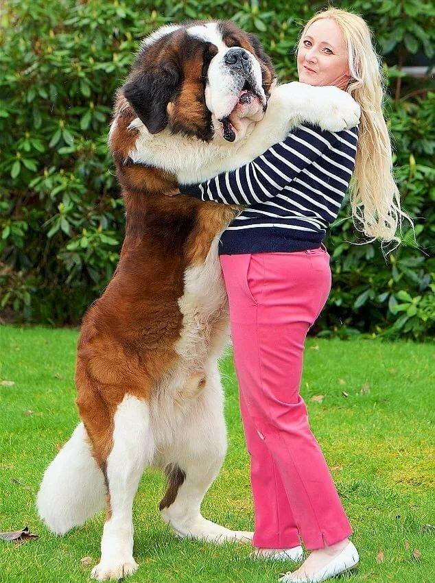 картинки про самую большую собаку секс кизлар келинлар