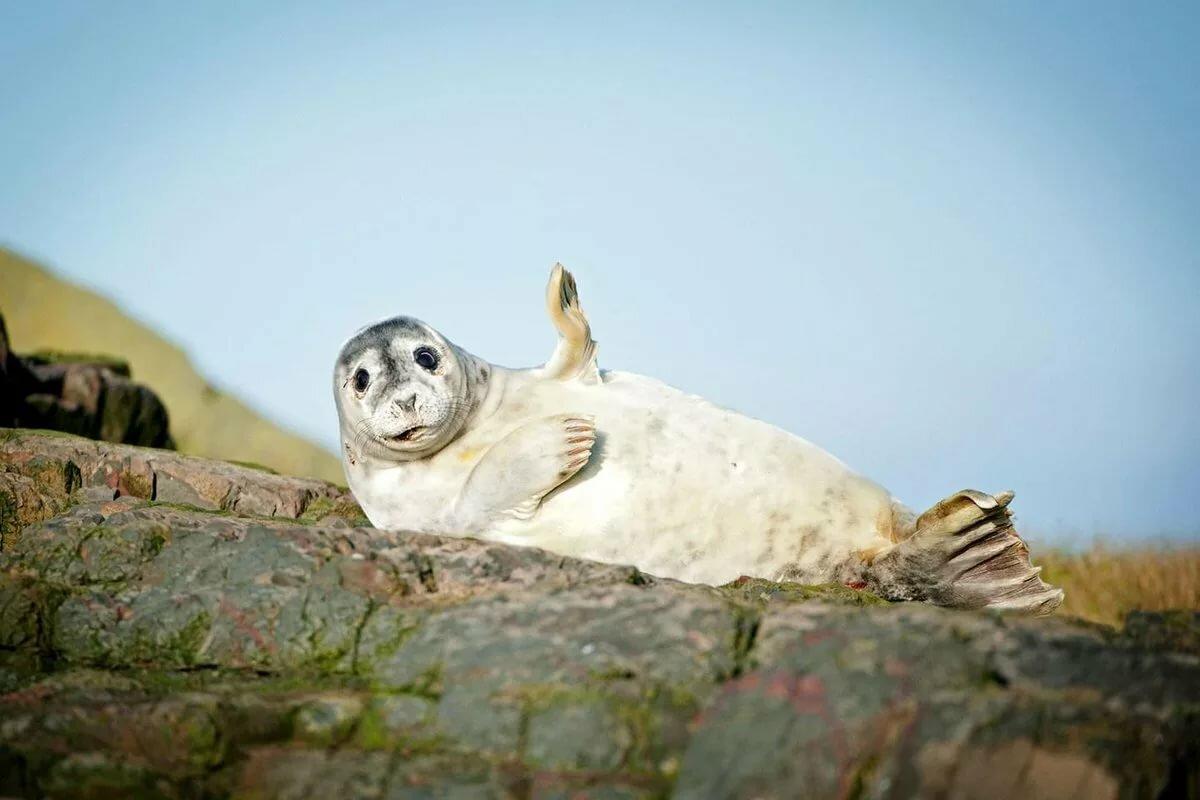 Фото тюленя смешные