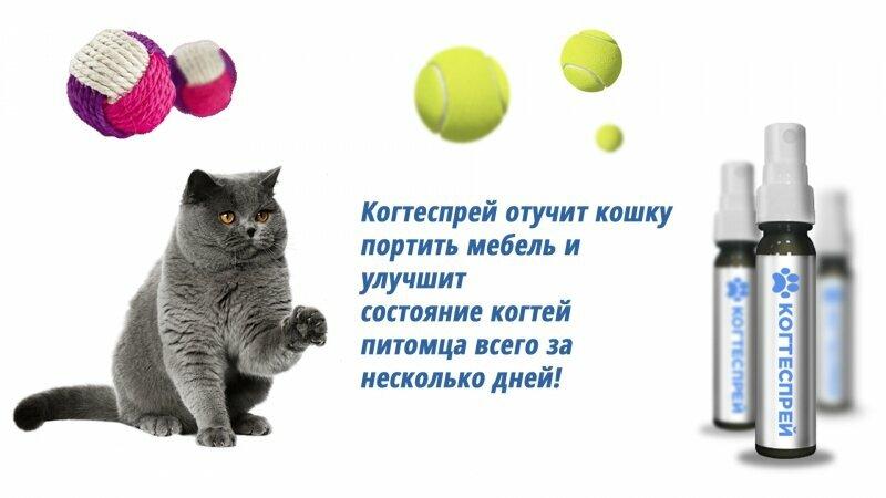 Когтеспрей - уникальный спрей для кошек в Ровно