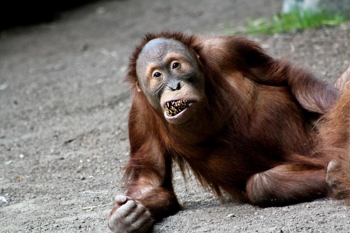 Смешные картинки из вк с животными