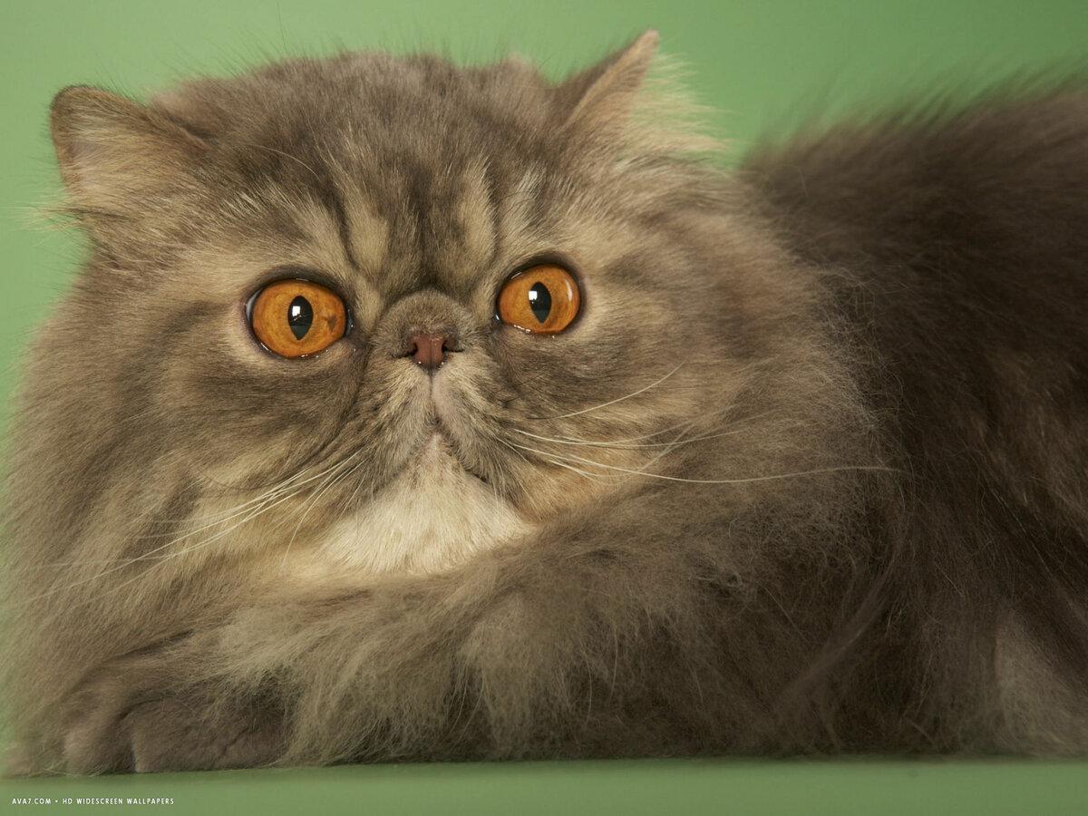 Стих кот и лодыри с картинками привыкать откровенности