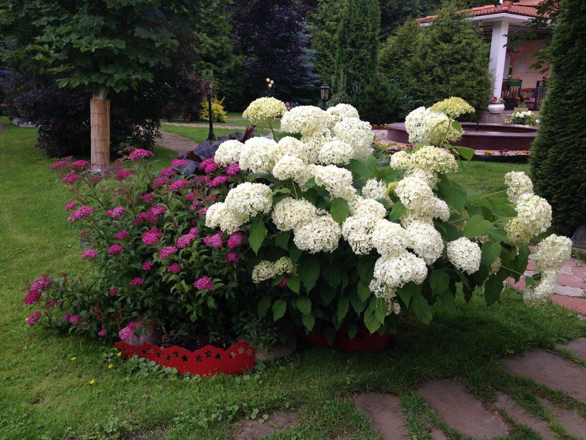 Каким цветом покрасить садовый домик фото средств защиты