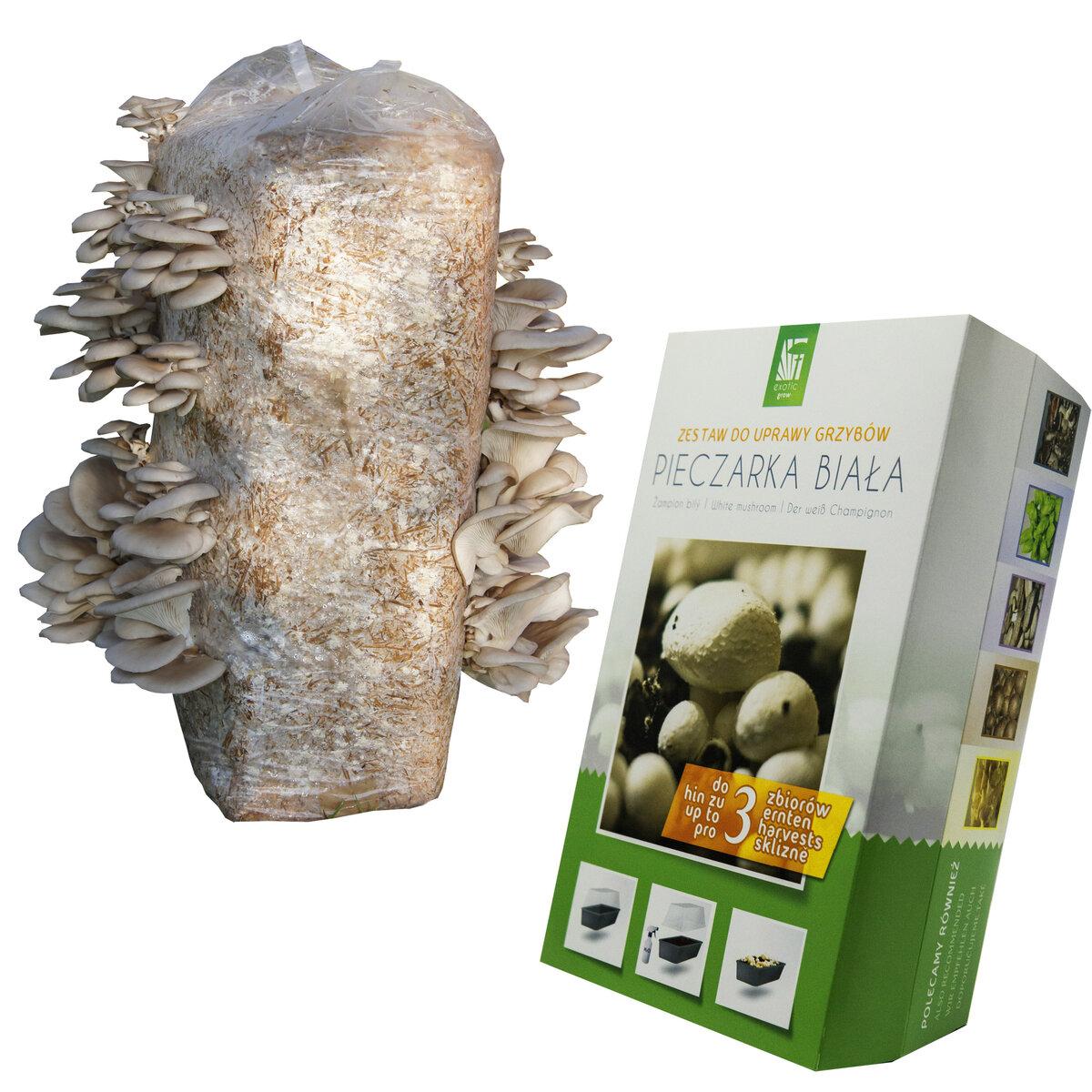 Набор для выращивания грибов Домашняя Грибница в Перми