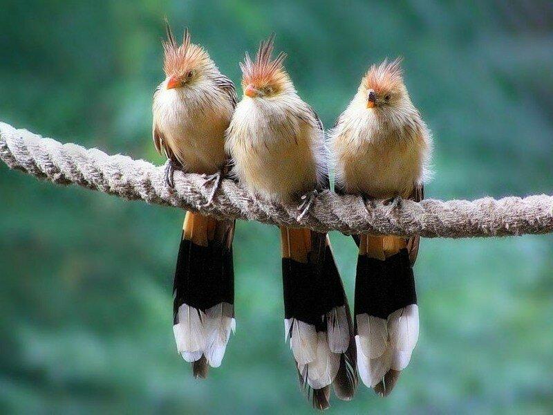 картинки классных птиц член вместе