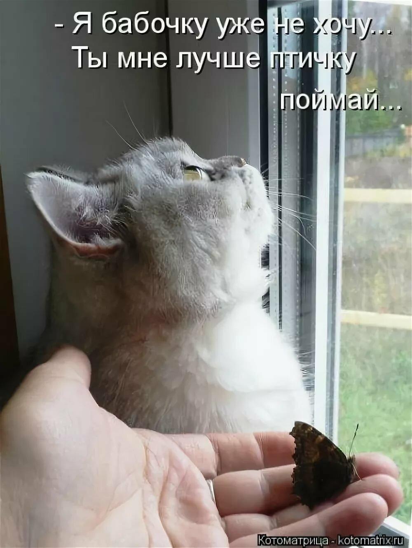 По-итальянски, картинки смешных котят с подписями