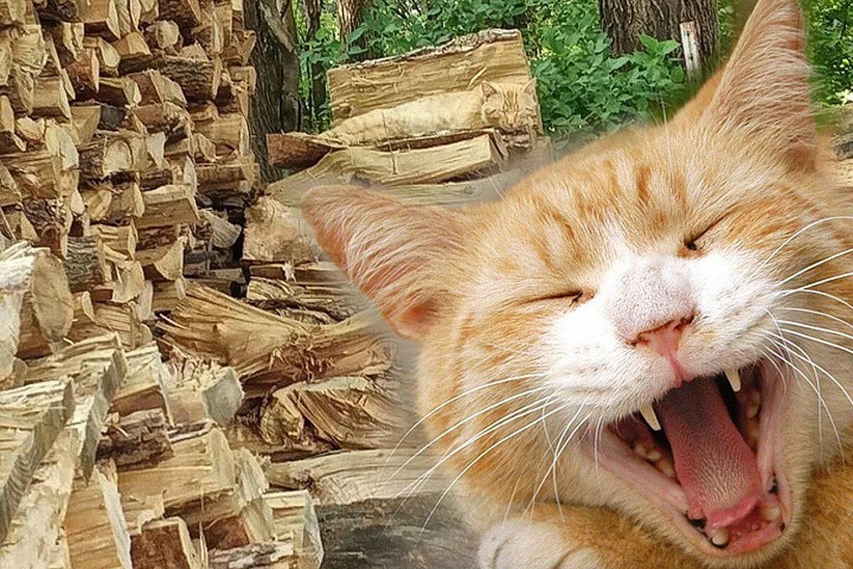 только картинка с дровами нашли кота согласно одной теории