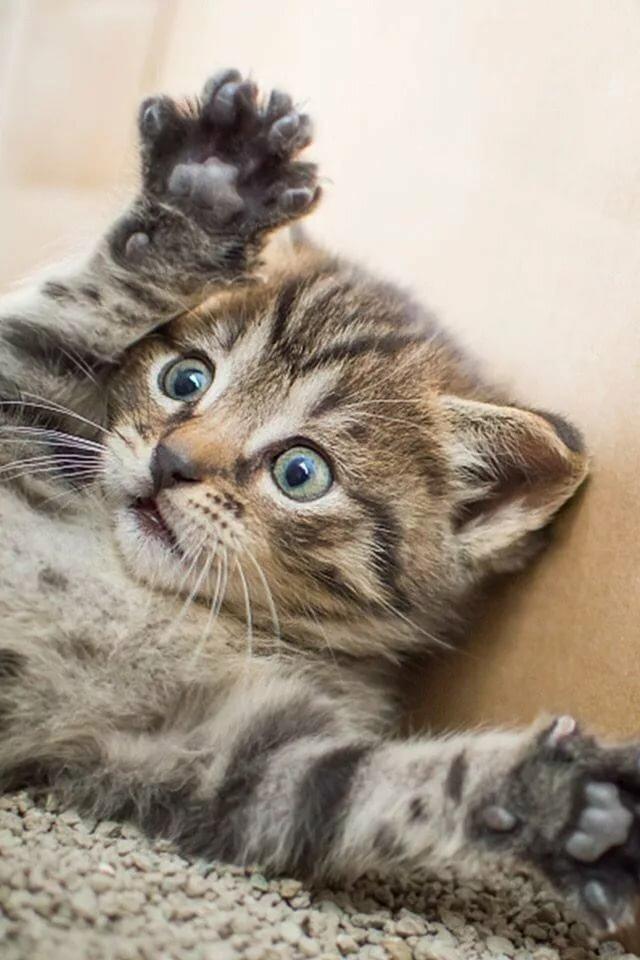 Картинки котята милые и смешные 2015