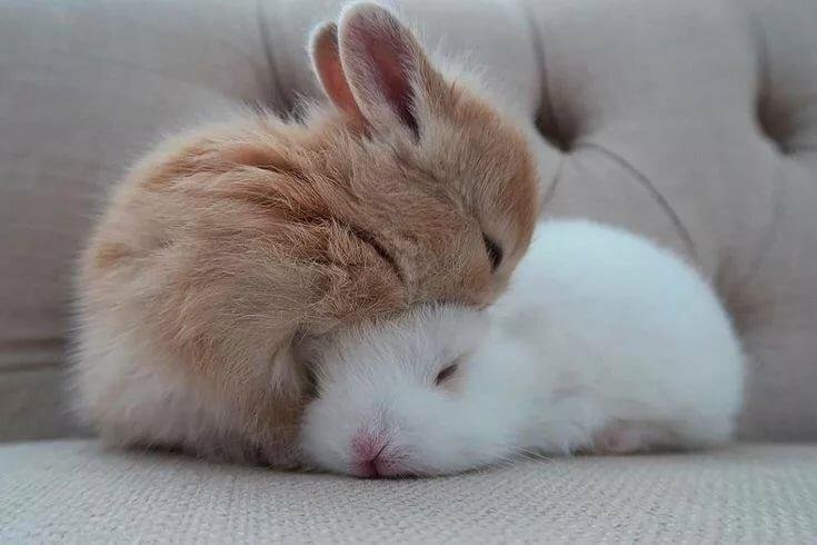 картинки спящего котика и зайчика вместе баловаться