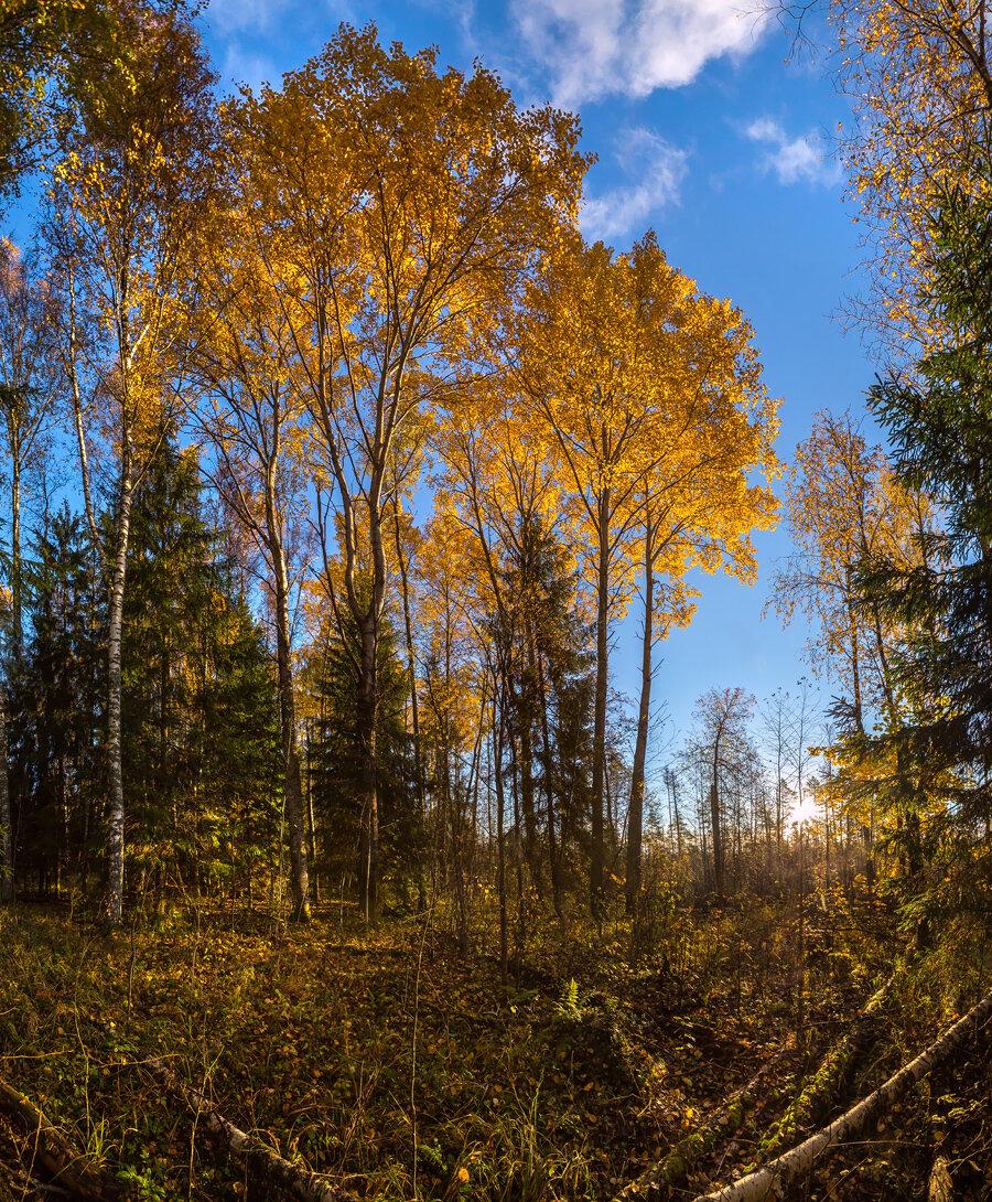 расти большим, картинки лесных опушек студийные