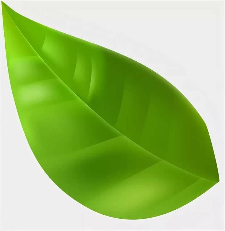 зеленые листья картинки для оформления распечатать и вырезать альтернативу