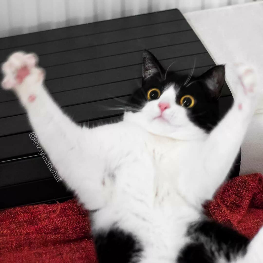 картинки в интернете кошки руси