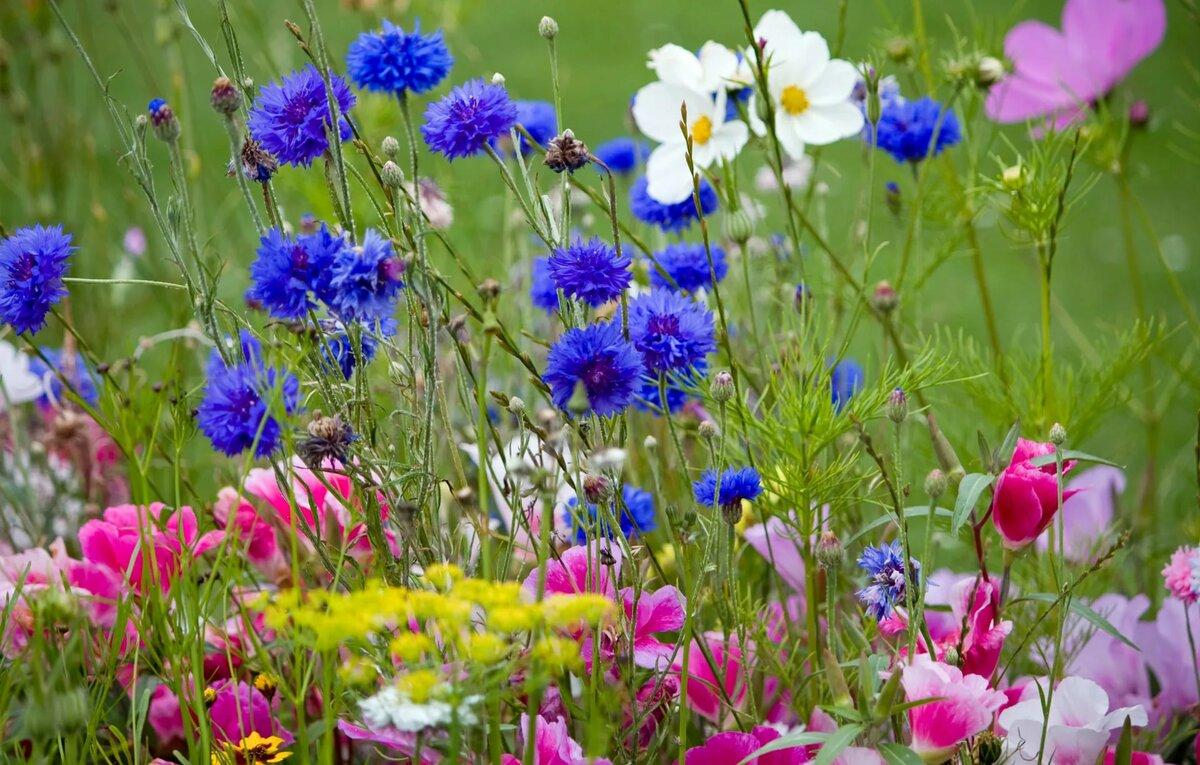 картинка яркие полевые цветы флагман это