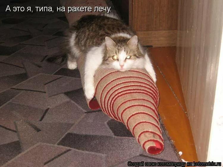 Смешные рисунки кошек с надписям