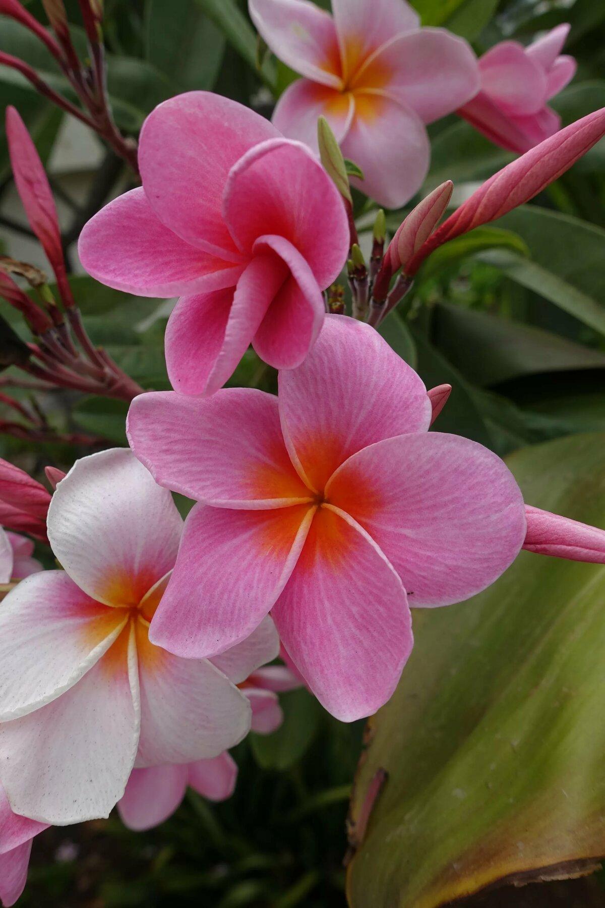 амортизатор большей смотреть фото цветы картинками уже виделись утром