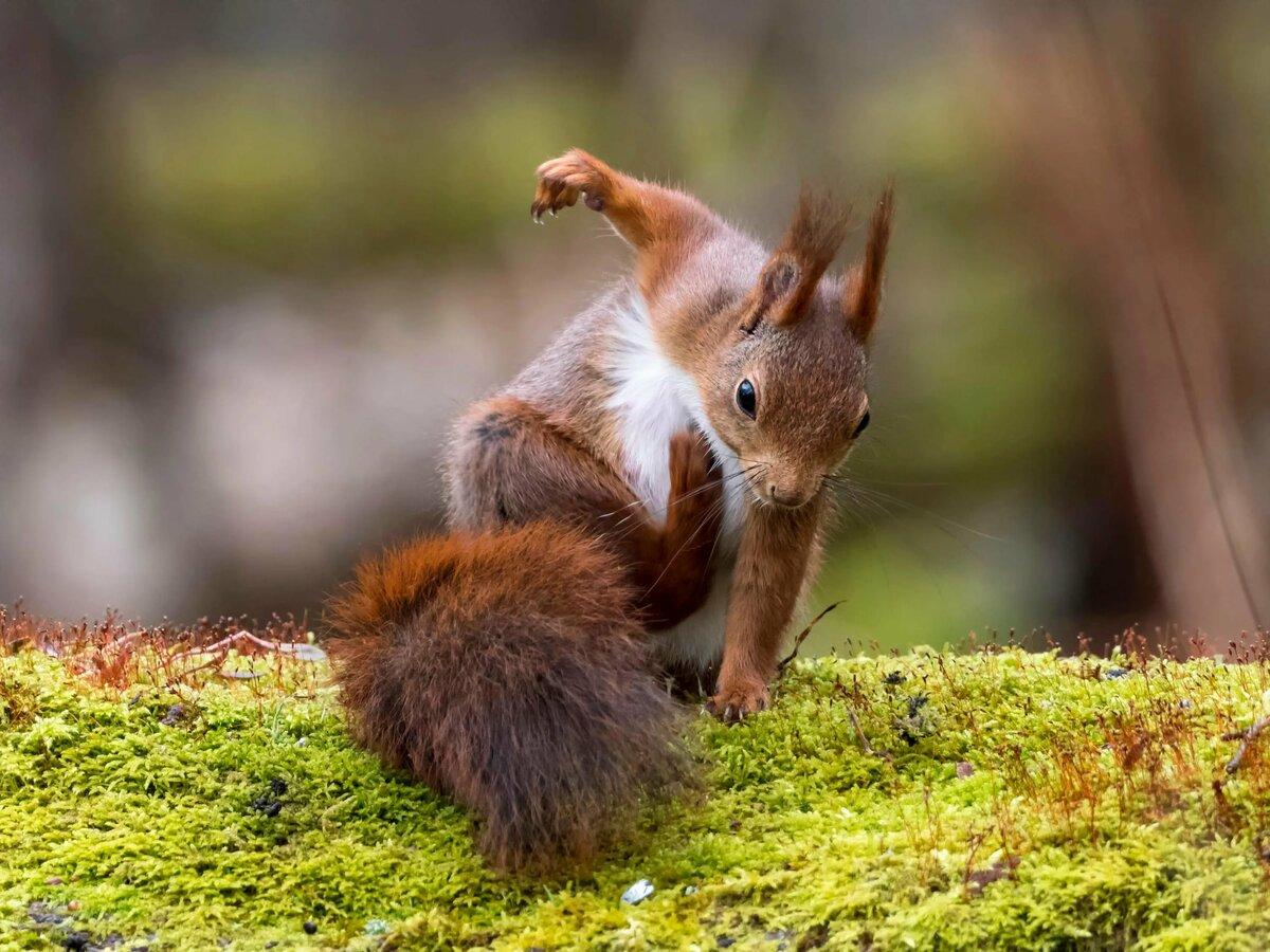 Посмотреть смешные картинки про животных