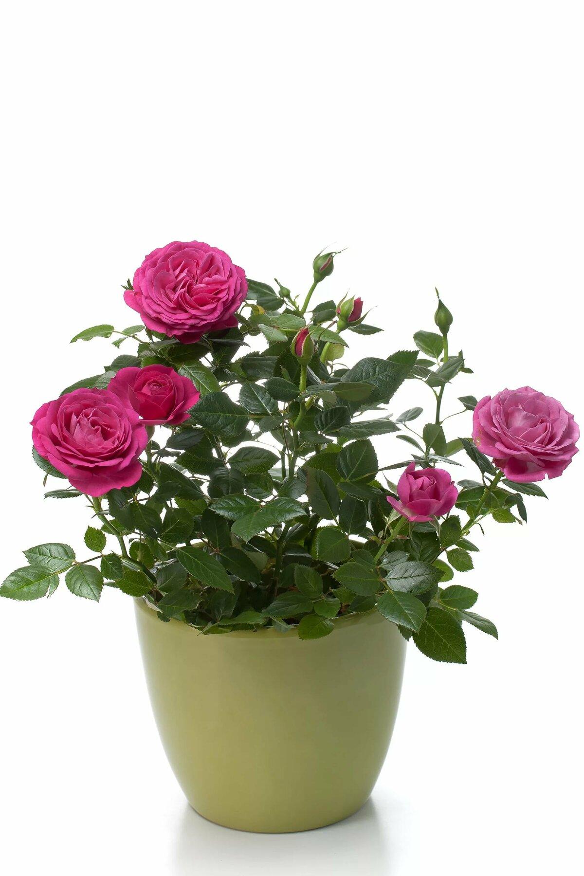 Красивые букеты из роз и хризантем фото буквы русского