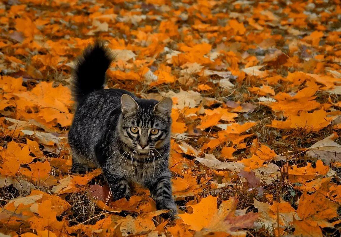 Котята осенью картинки на рабочий стол
