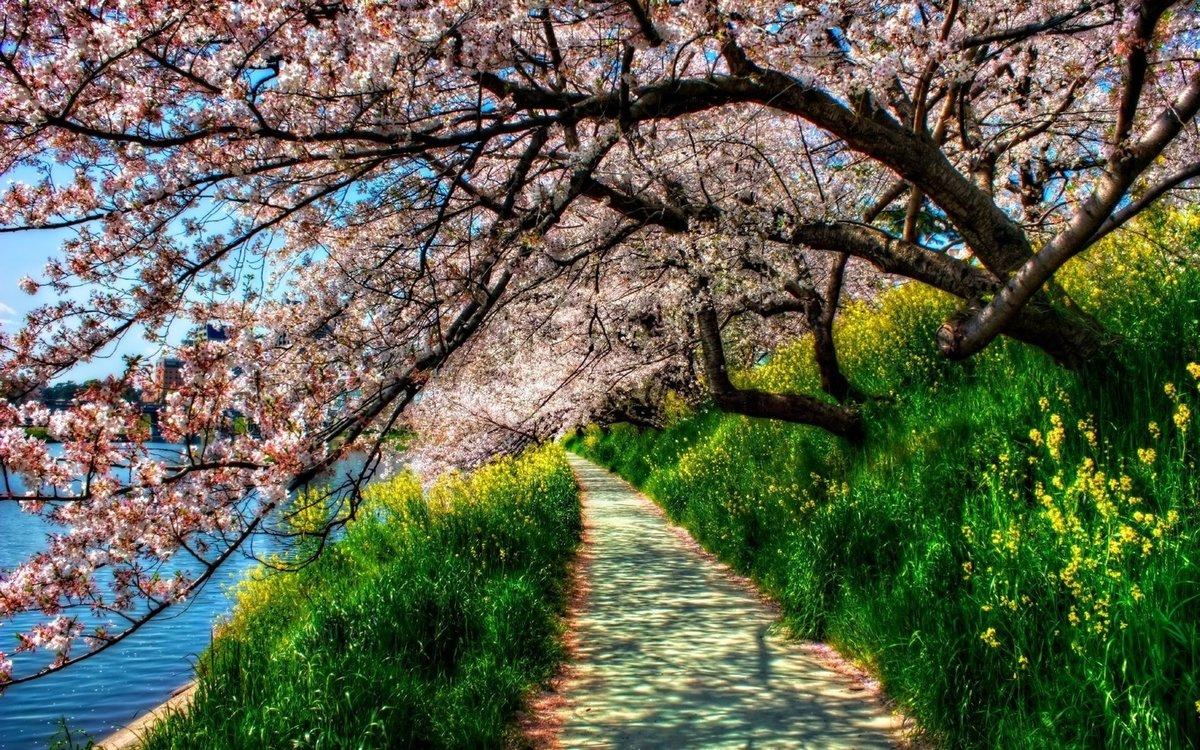 Картинки природы весны, добрый