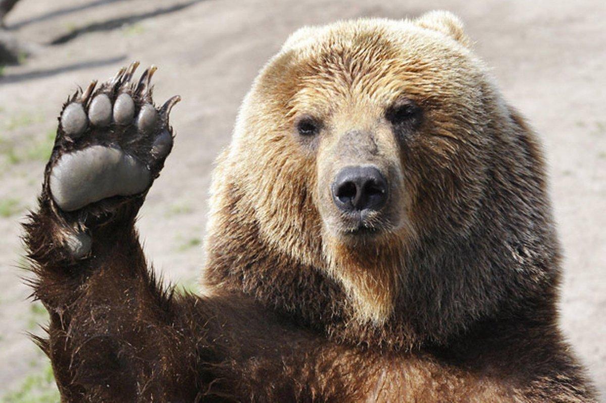 Смешные картинки россия медведь, днем рождения мужчину