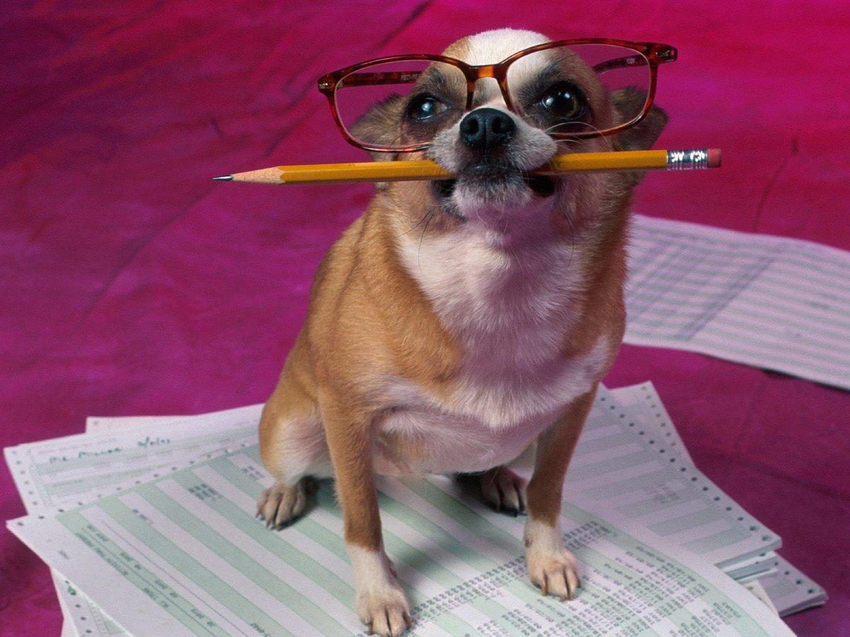 Смешные картинки про школу с животными, очень