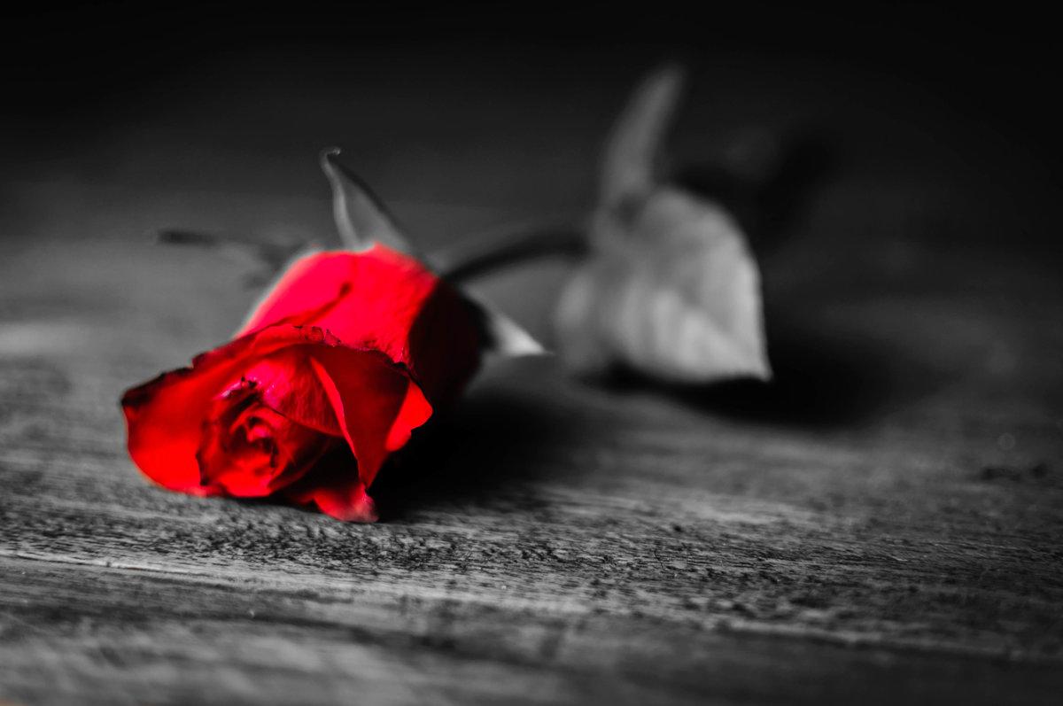 летучая печальные картинки цветов поздравила