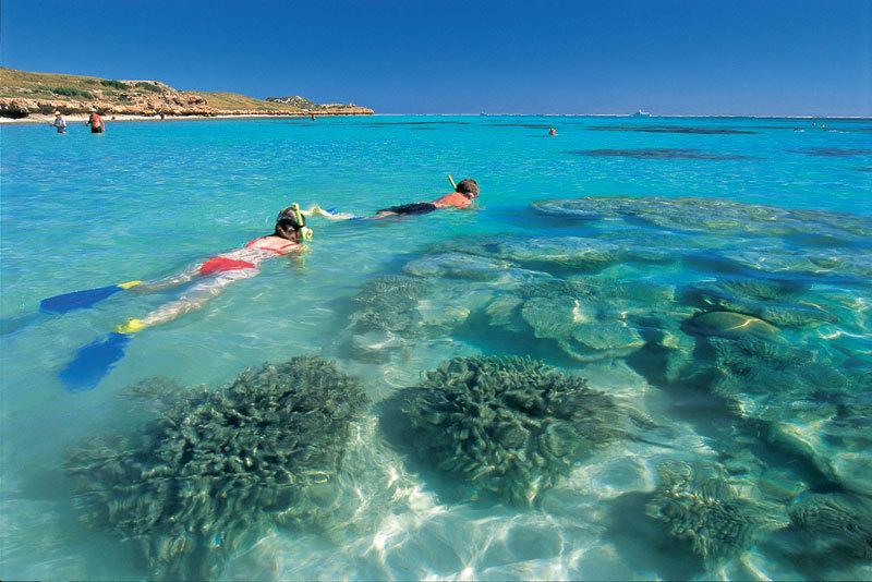 Картинки по запросу Риф Нингалу Ningaloo Reef