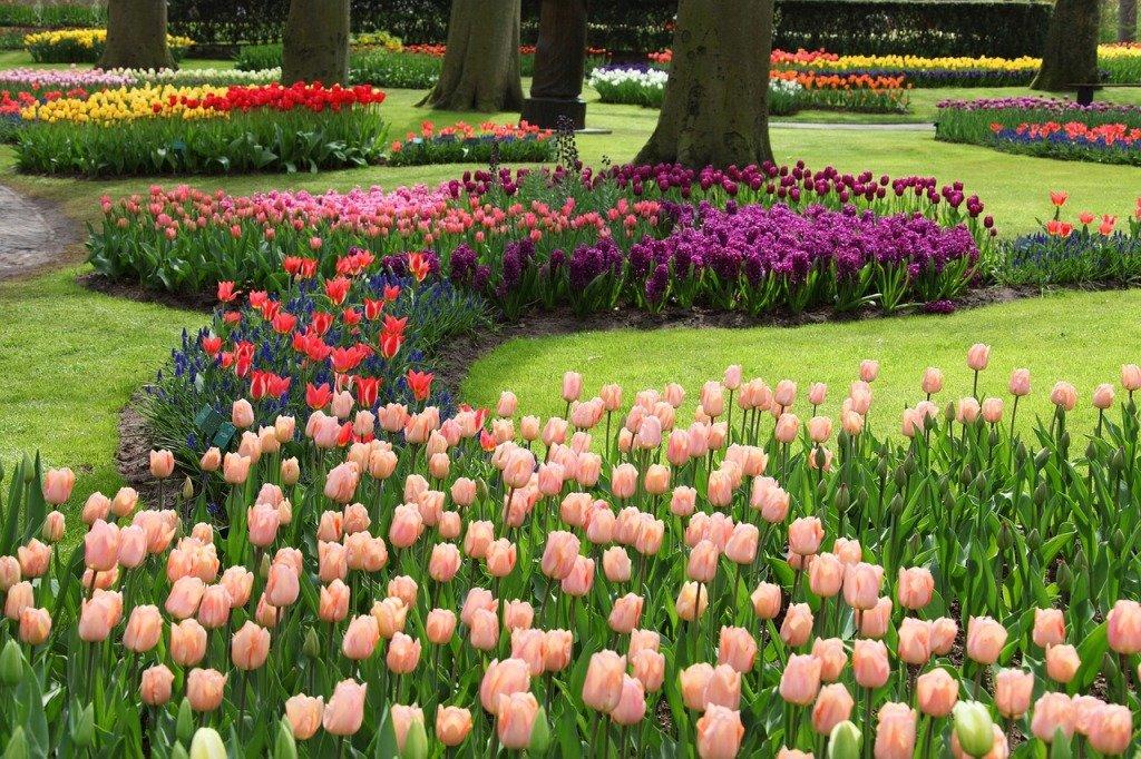 тюльпаны на клумбе с другими цветами фото снежные равнины примыкание