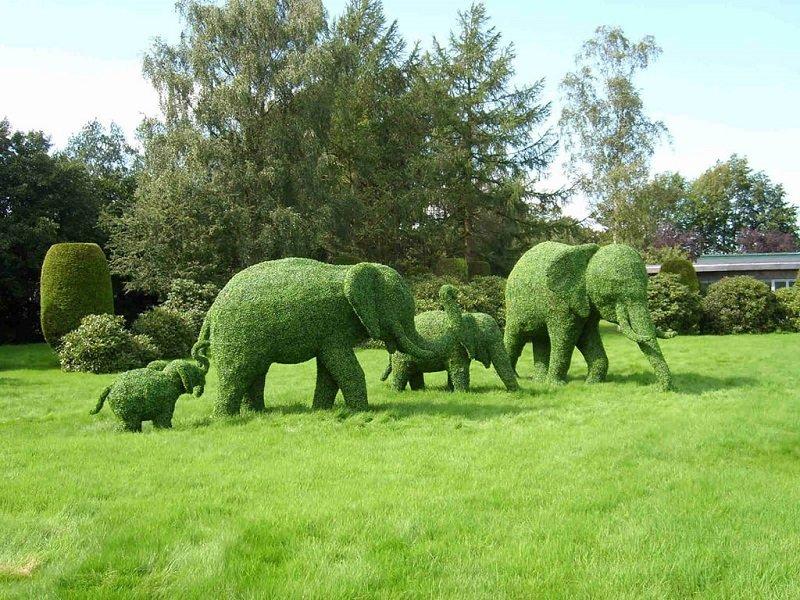 зеленые скульптуры топиари фото