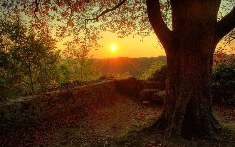 красивый закат в лесукласс