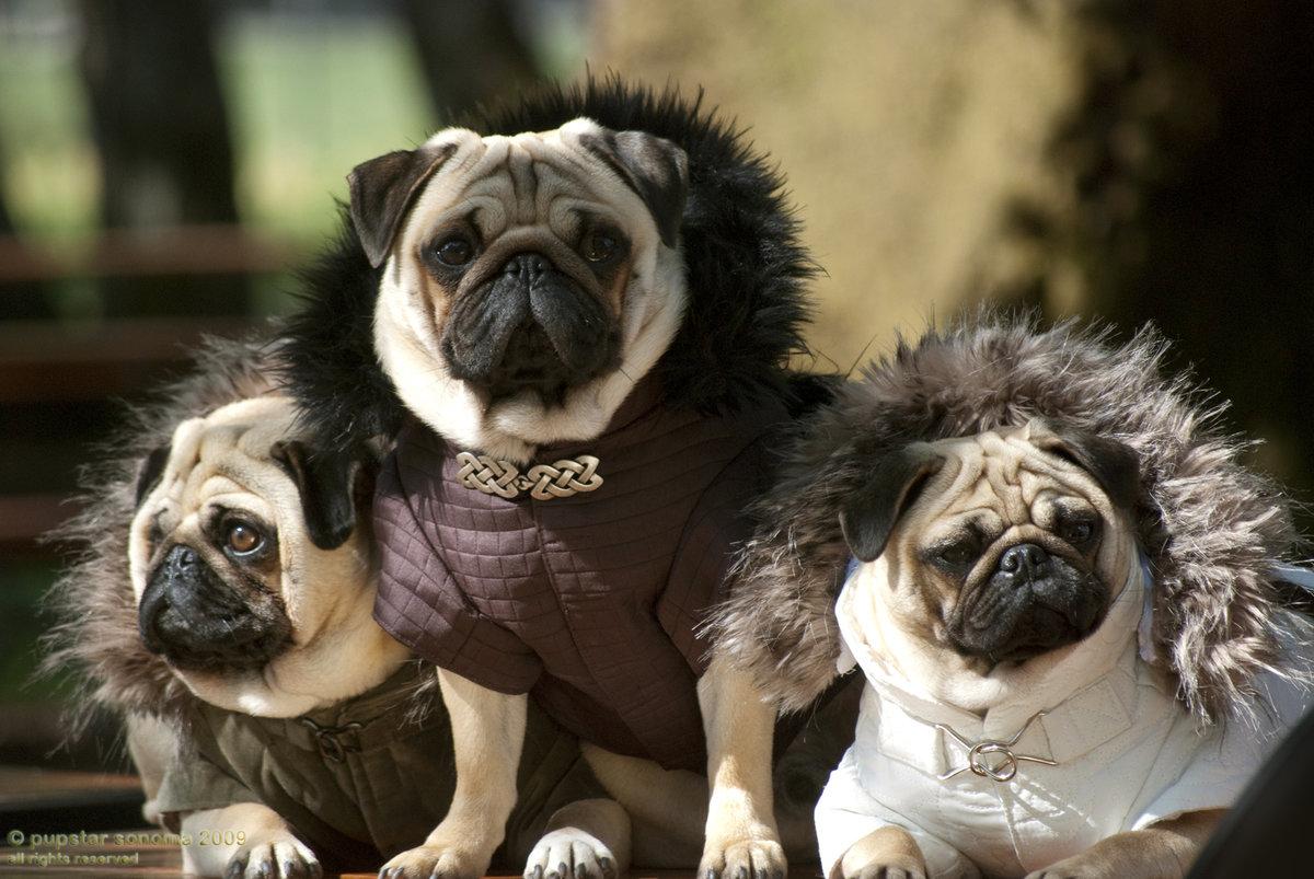 Прикольные картинки собак всех пород, поздравления новый год