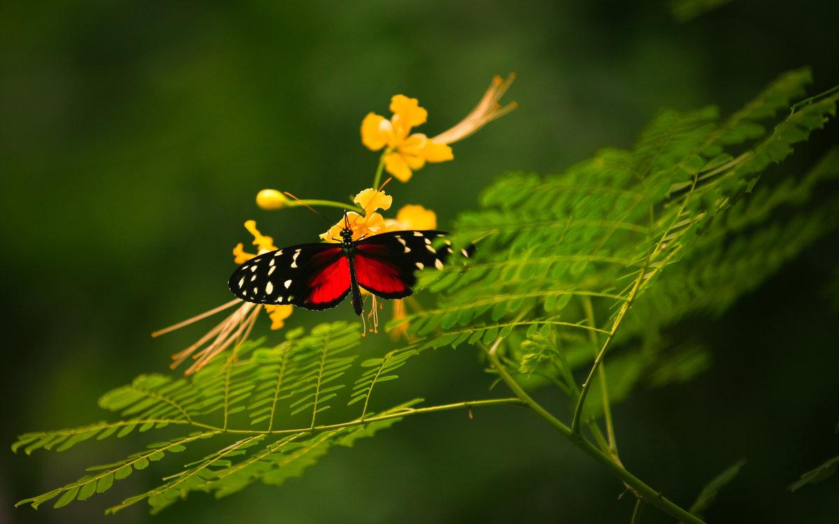 Картинки красивые насекомые, приколы