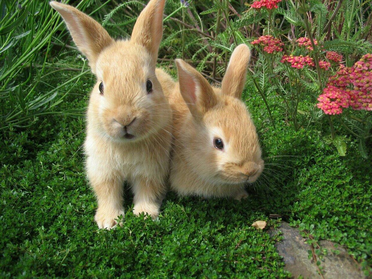 Смайликом, картинка кроликов