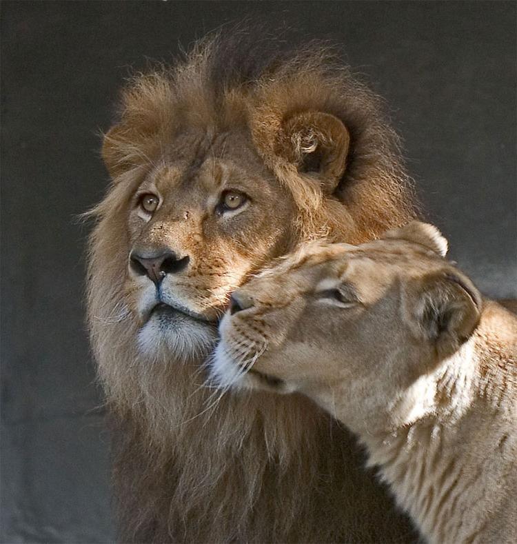Картинки влюбленных животных с надписями, открытка