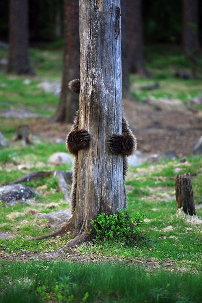 красиво дерево за которым будут прятаться евреи видео государственный технический