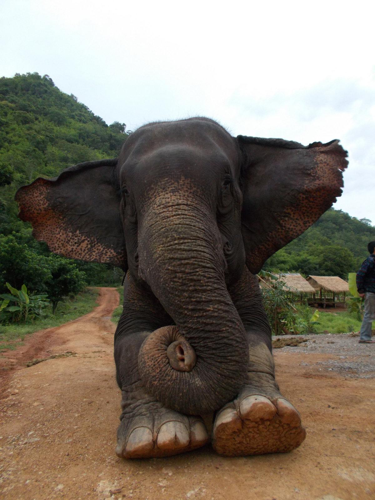 Картинки смешные со слонами
