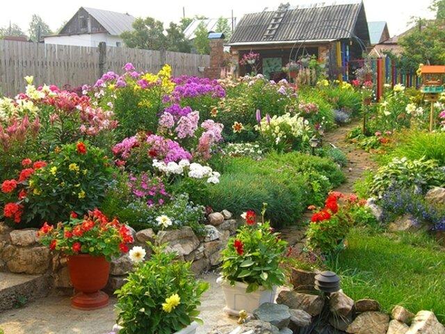с какими цветами сочетаются лилии на клумбе фото