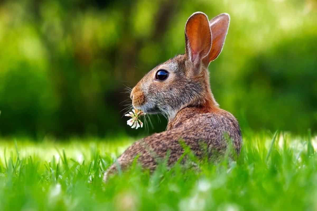 Картинка с зайчатами, смешная шутка картинка