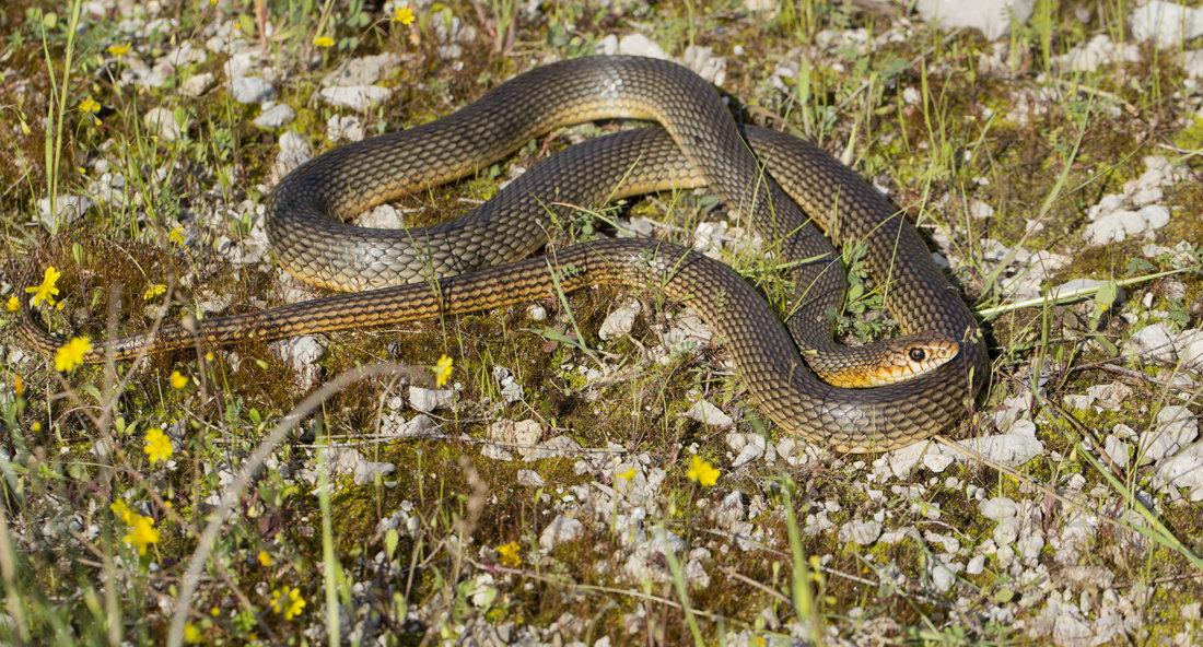 змеи ростовской области фото и названия поплавок проверьте, засорена