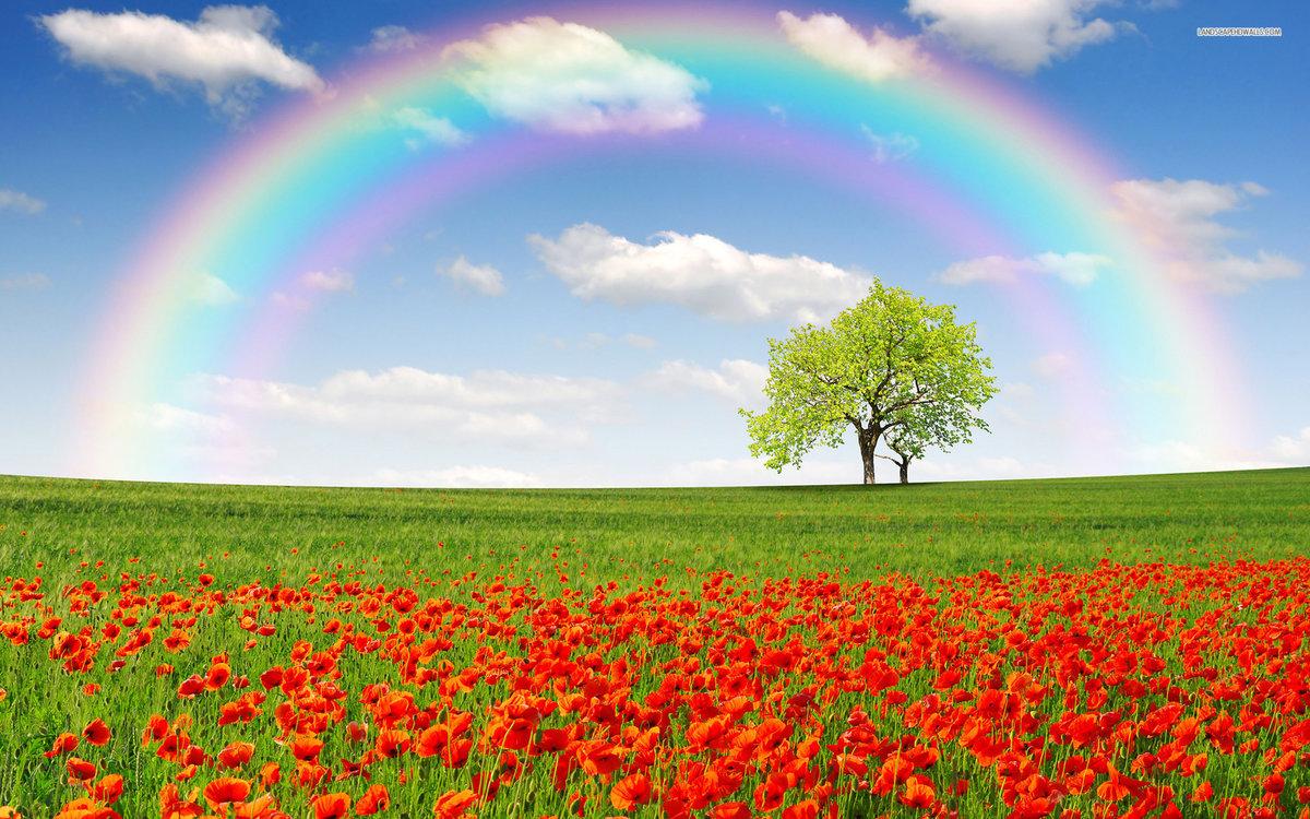 Февраля, анимация радуга над полем