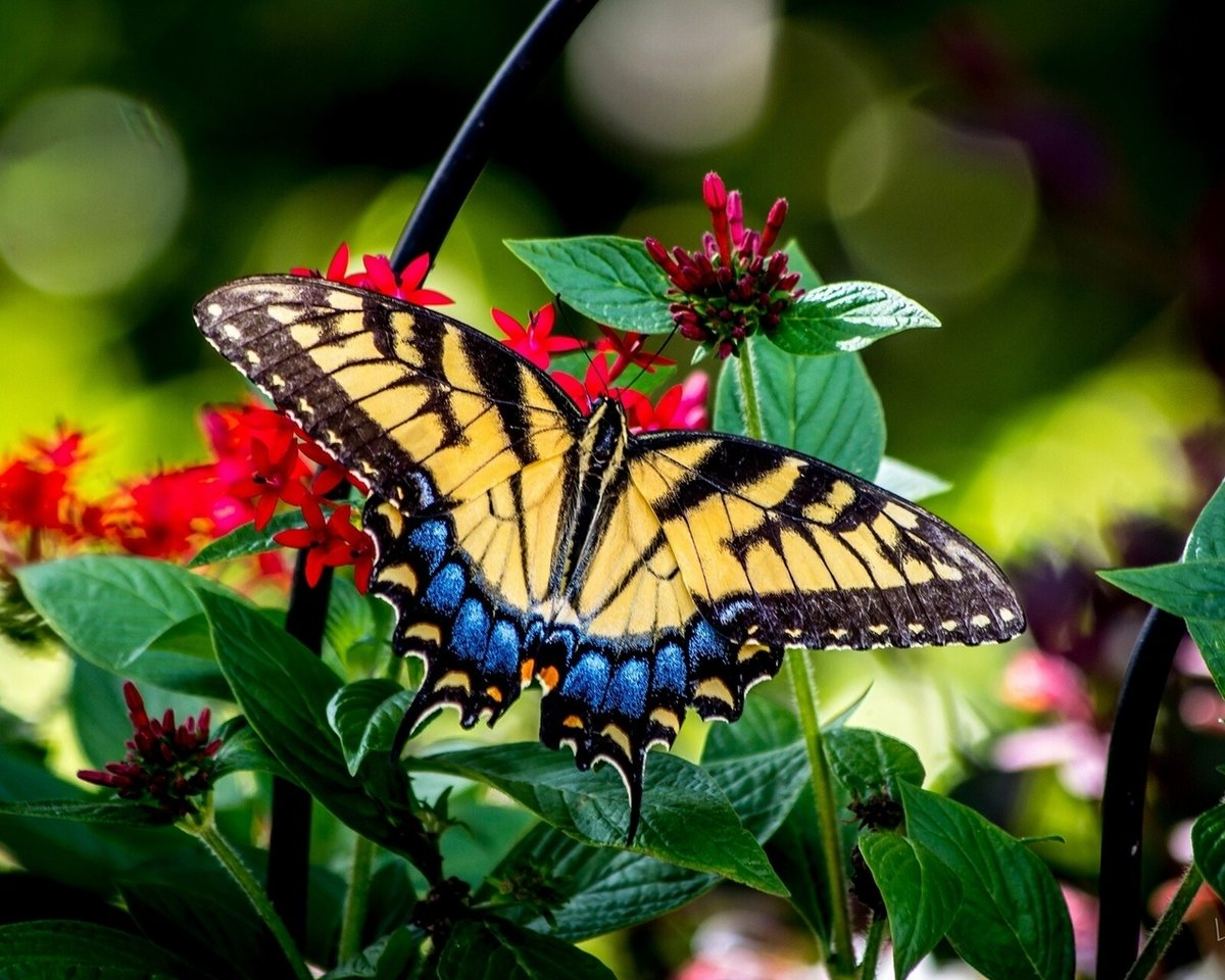 фото бабочек высокого качества завышенные требования, основанные