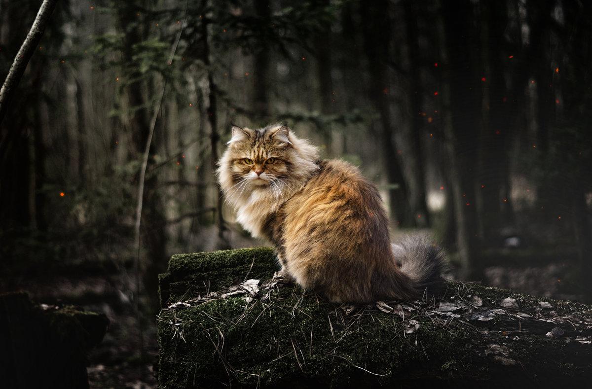 Фото кота в лесу