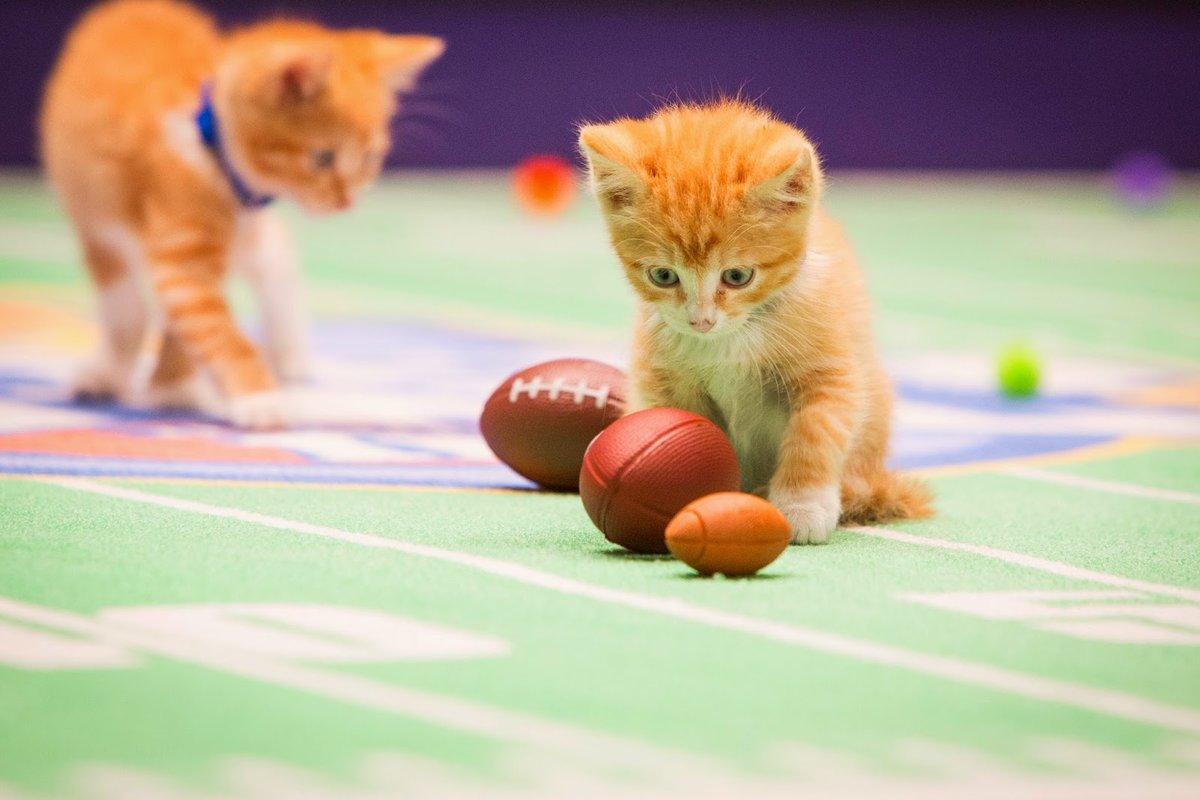 возможности картинки игры с котятами или небольшие