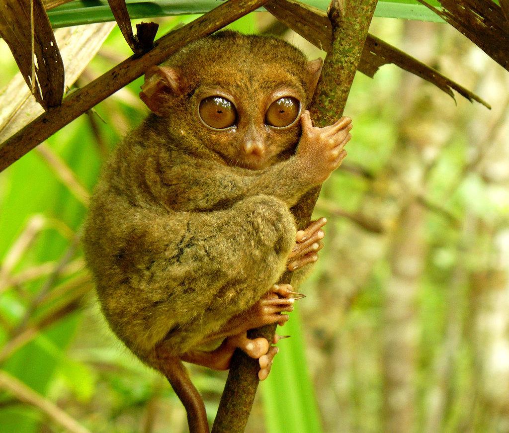 Фото самого экзотического животного